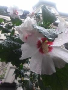 flowerbk